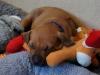 Hr. Blå sover med sine bamser 17.03.12