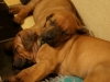 Hr. Lilla og Hr. Grøn sover trygt 13.03.12