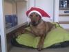 Amira har også leget julenisse her i dec. 2012