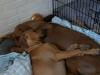 Anaya sover altid tæt op ad sin mor 21.06.12