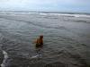 Aslan er også en vandhund