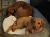 Anaya og Bikita nyder den store nye hundekurv 09.05.12