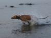 Anaya i fuld fart ud i vandet 14.07.12