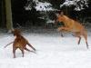 Anaya vender i luften for at løbe efter Bikita
