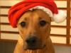 Anaya julenisse 10 måneder og verdens dejligste 15.12.12