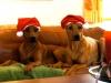 Bikita og Anaya ønsker Glædelig Jul 15.12.12