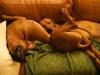 Julehygge i sofaen, Anaya med hovedet på mors mave 20.12.12
