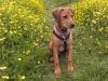 Amira i blomstereng sommeren 2012