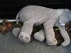 Dumbo passer alle 20.02.12