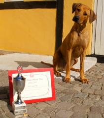 Anaya september 2013 med sit diplom og opkal for årets Baby/Hvalp Tæve 2013