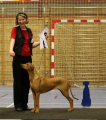 Anaya 24.11.12 bliver 2. bedste tæve i konkurrencen med alle de voksne tæver og får certifikat. foto Benny Fischer