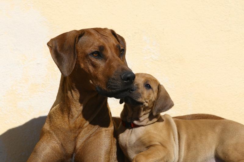 Bikita holder vagt medens hun får et lille kys af hendes datter Anaya forår 2012