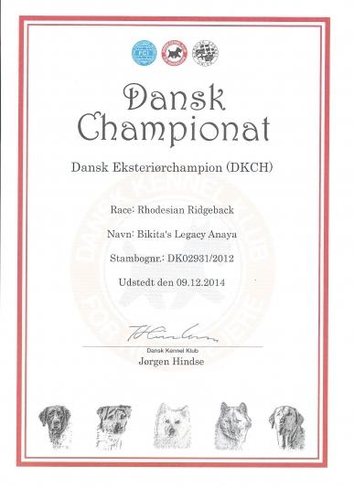 Anayas fine diplom, der beviser at hun nu er Dansk Champion