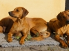 Bikita, Anaya og Baloo nyder efterårssolen