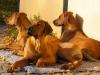 Smuk eftermiddag i oktober, hvor Anaya, Bikita og Baloo nyder solen