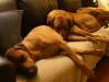 Anaya, Baloo og Bikita slapper af efter en begivenhedsrig weekend