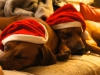 2 trætte nisser: Anaya og Baloo julen 2015